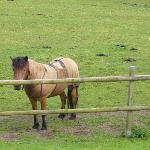 Caramel the Pony