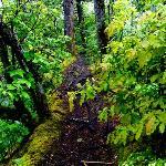 Rain soaked trail.