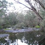 Warren River 100 mtrs from our cottage