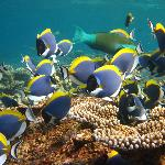 Diving Bluetribe Moofushi Foto