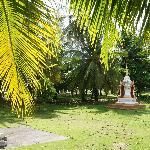 territory, Suwan Palm