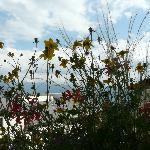 Vue du balcon fleuri