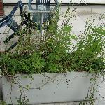 Seltene Balkonkastenbepflanzung