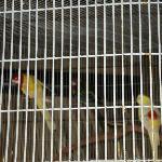oiseaux près dela piscine