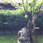 Garden with huge Balinese oranges growing on trees