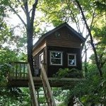 Maple Oak tree house sleeps 2-4 people