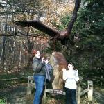 That's a big hawk!