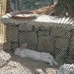 il verde rilassa anche i conigli