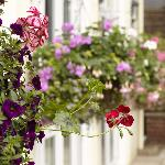 Our lovely garden & hanging baskets