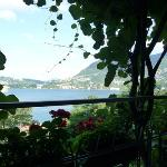 The view from the terrace - underneath the kiwi-vines!