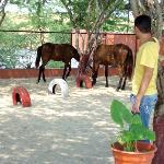 Os Cavalos perto do restaurante