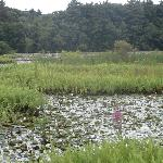 The Nature Trail And Cranberry Bog