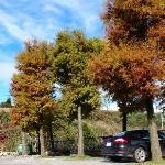 停車場的楓紅 parking lot