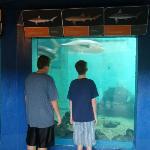 Looking at fish