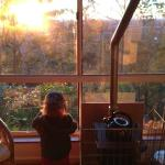 sunrise from kookaburra cabin wallaby watching