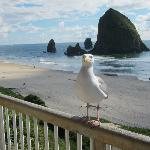 Viewing Haystack rock with a friendly local.