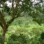 scenery around Boquete
