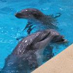 Dolfijnen binnen na de indoorshow (de grote show)