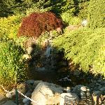 A little waterfall near the pool