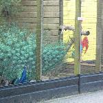 Een pauw in de kinderboerderij