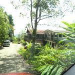 View down the driveway to Rainforest Inn