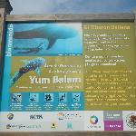 Reglamento para nado con el Tiburón Ballena!