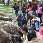 Animal feeding in the farm!