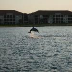 Dolphin on Sunset Cruiseh