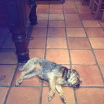 Dogs welcome at the Crown