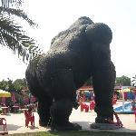 acquapiper gorilla
