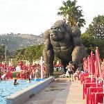 acquapiper gorilla veduta piscina