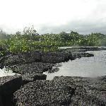 Percorso tra giungla e oceano, da film