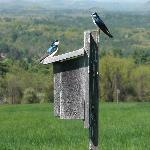 Great trails for bird-watching!