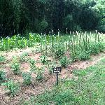 Chef Marvin's garden