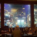 Beautiful aquarium bar, littered w/ past guests' glasses & napkins.