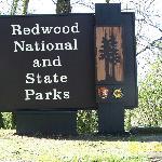 Adjacent California Redwoods