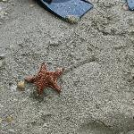 Fun finding Starfish