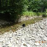 Our dog Dexter enjoying the fresh stream water