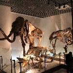 Awesome Museum