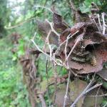 rusted iron rose