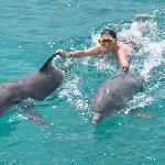 Dolphins Academy