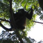 Monkey in the backyard