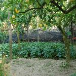Garden - Organic