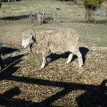One of the farm animals