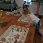 Examining the insects