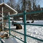 European Bison Nursery