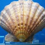 A shell from the exhibit