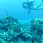 Sabine leads the dive through the reefs