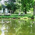 Pond overlooking Cottage