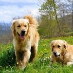 Dogwelcome a Il Cucciolo